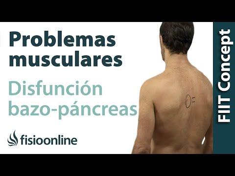 7 claves para entender la relación entre el páncreas y el dolor de ...