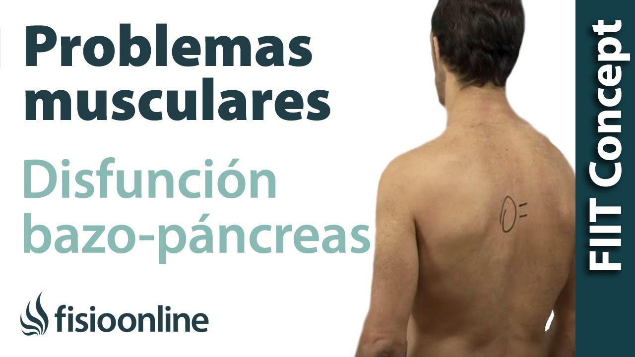 Bazo-Páncreas - Problemas articulares y musculares que pueden ...
