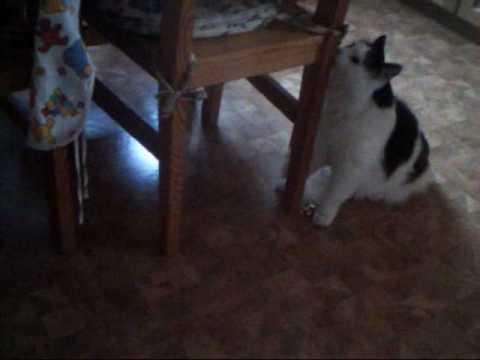 23.12.09 - My Cat