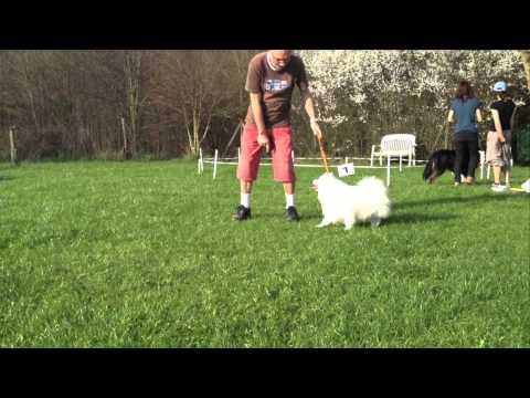 Dog Dancing Kurs