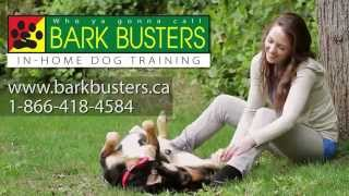 Bark Busters Home Dog Training - A Better Way To A Better Dog