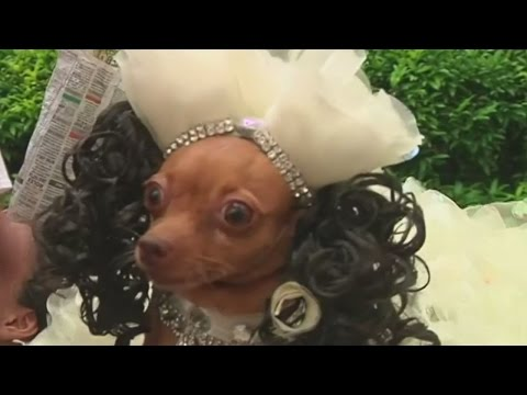 PETrifying dogs and cats join Halloween fashion show