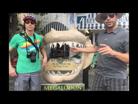 Deadliest Snakes Spiders & Sharks  World&39;s Greatest Animals Trailer 👍