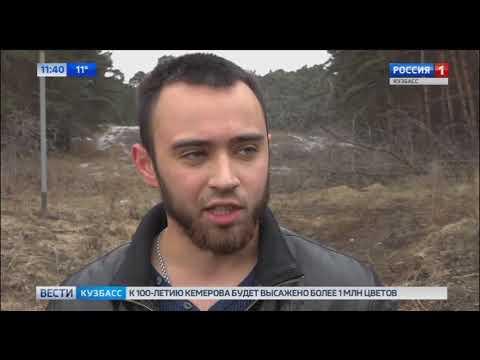 Кемеровчан возмутила вырубка соснового бора
