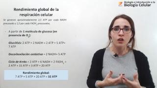 Biología Celular: Cadena de transporte de electrones y fosforilación oxidativa (10/10/2018)