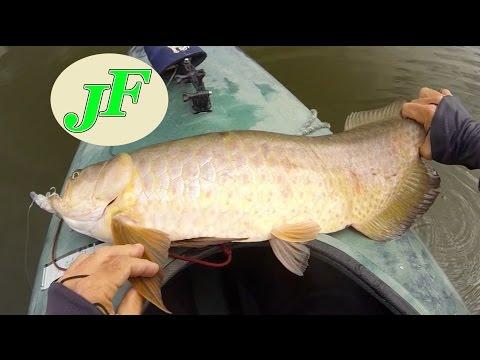 Arowana Kayak Fishing Topwater Saratoga Just the Fish Videos EP.261b