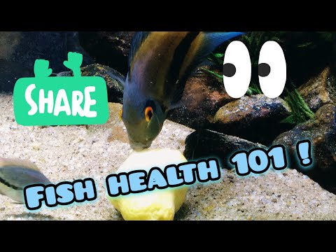 Why You Should Feed Fruit To You Fish !?