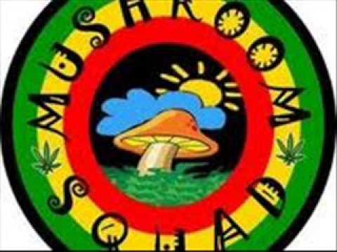 mushroom squad - jamur happy