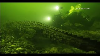 Diving with Crocodiles || Diver Has Lucky Escape From Crocodile | Super Giant Animals