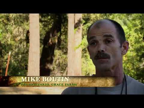 Marijuana America Illegale: L' Inferno del raccolto (ITA)
