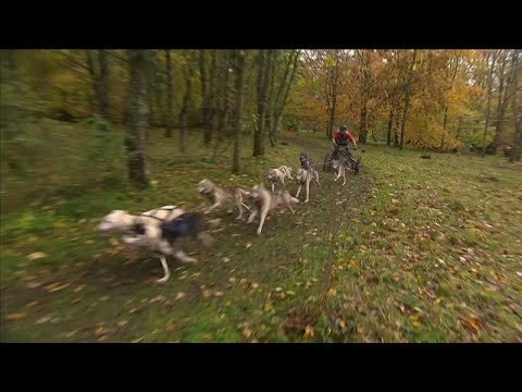 شاهد: سباق للكلاب التي تجر العربات في إنجلترا  - نشر قبل 2 ساعة