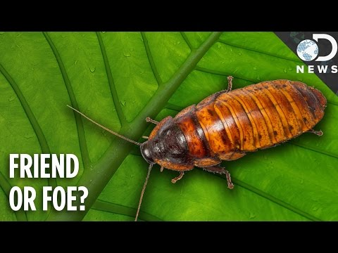 Why Do Cockroaches Even Exist?