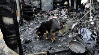火災後狗場 請萬勿捐款
