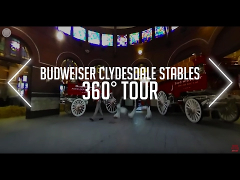 Budweiser Clydesdale Stables : 360° Tour