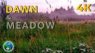 НЕЖНЫЙ РАССВЕТ НА ЛУГУ. СВЕТАЕТ. Травы, цикады, слушать, сверчки, звуки природы, пение птиц, природа