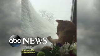 Cat and squirrel face off through window