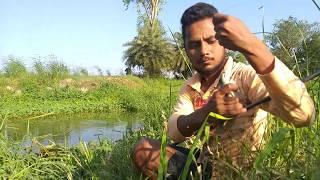 Fish hunting    Murrel  fishing