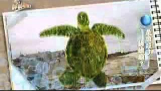 20101015-1《呼叫妙博士》海中坦克綠蠵龜