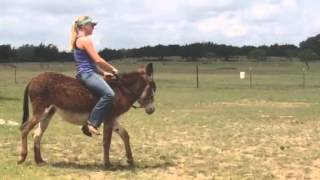 Repeat youtube video Riding Punkin the donkey