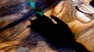 Кошка на второй день после стерилизации