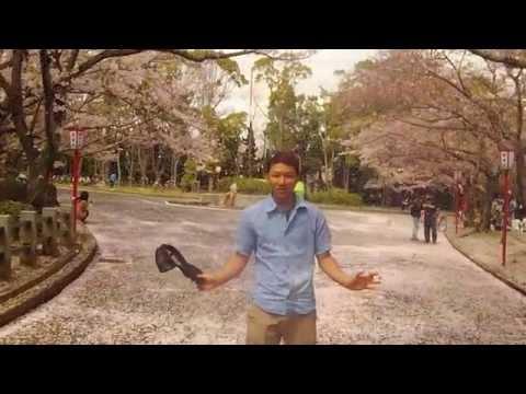 SAKURA TOYOHASHI AICHI JAPAN
