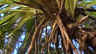 Видоизменения корней