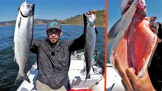 Fishing for Salmon SOLO in Pacific Ocean BRIGHT PINK MEAT