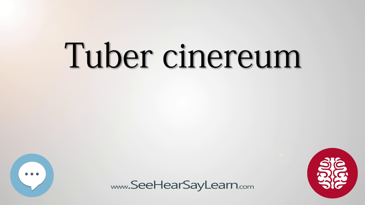 Tuber cinereum Anatomy of the Brain SeeHearSayLearn 🔊 - YouTube