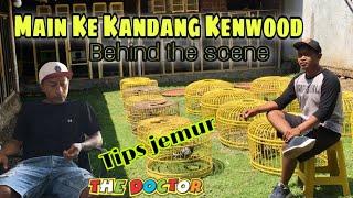 MAIN KE KANDANG KENWOOD - Tips Jemur Merpati Kolong ( BEHIND THE SCENE )
