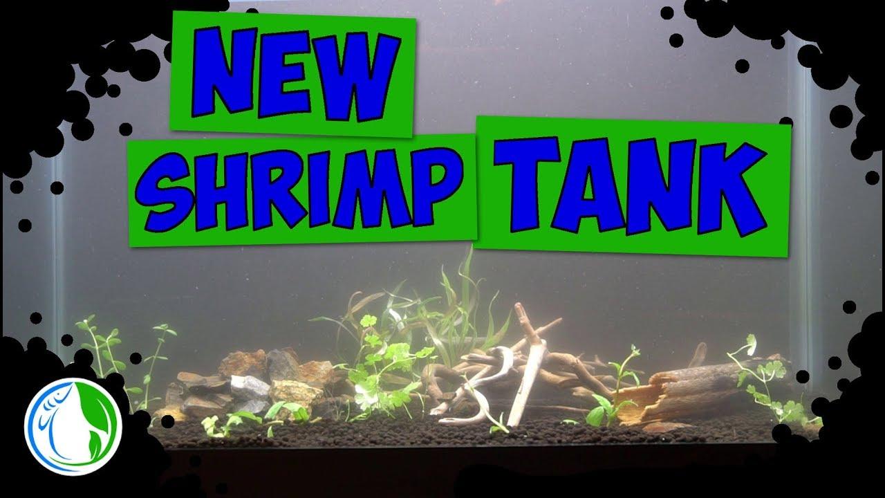 NEW SHRIMP TANK AQUASCAPE SETUP - OLD TANK NEW SCAPE - YouTube
