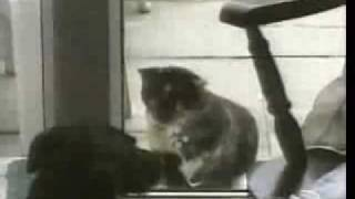 нарезка смешного видео с котами...улет!!!