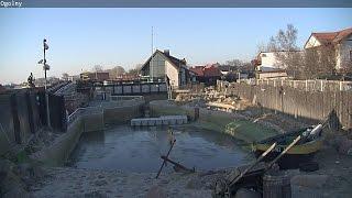 Fokarium w Helu na żywo / Webcam