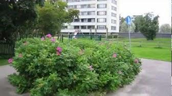 Vieraslajit kuriin: kurtturuusu, Varsinais-Suomen ELY-keskus