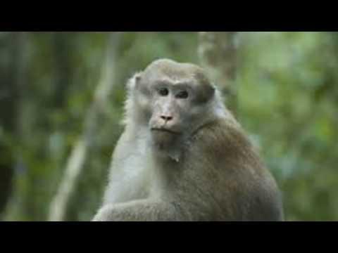 New Theory on Bigfoot Samurai Chatter - 12/12/2016