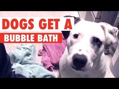 Dogs Take A Bubble Bath