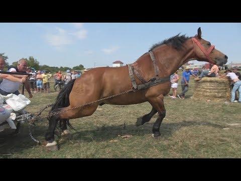 Concurs cu cai de tractiune Osorhei, Bihor 2017