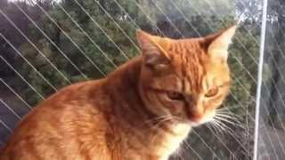 Talking Cat- One day I decided to talk.....