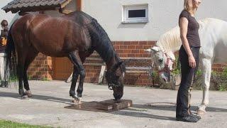 Экперимент: социальное обучение лошадей.