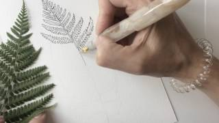 Botanical illustration of a fern
