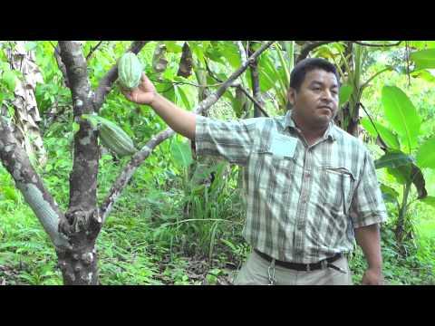 Juan Cho of Ixcacao describes organic farming in Belize