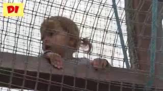 ♕ Диана в детском сказочном парке Лукоморье Совхоз имени Ленина Москва Парк сказок Princess Diana
