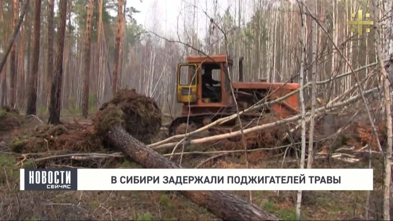 В Сибири задержали поджигателей травы