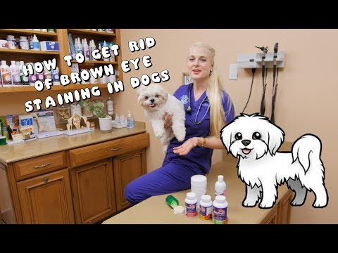 How to Get Rid of Brown Eye Staining in Dogs
