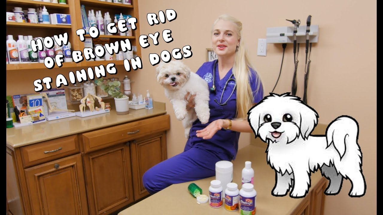 Get Rid Of Brown Eye Staining In Dogs