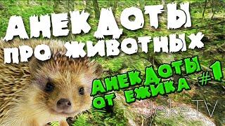 Анекдоты про животных. Анекдоты от Ёжика #1