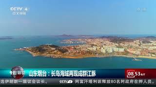 [今日环球]山东烟台:长岛海域再现成群江豚| CCTV中文国际