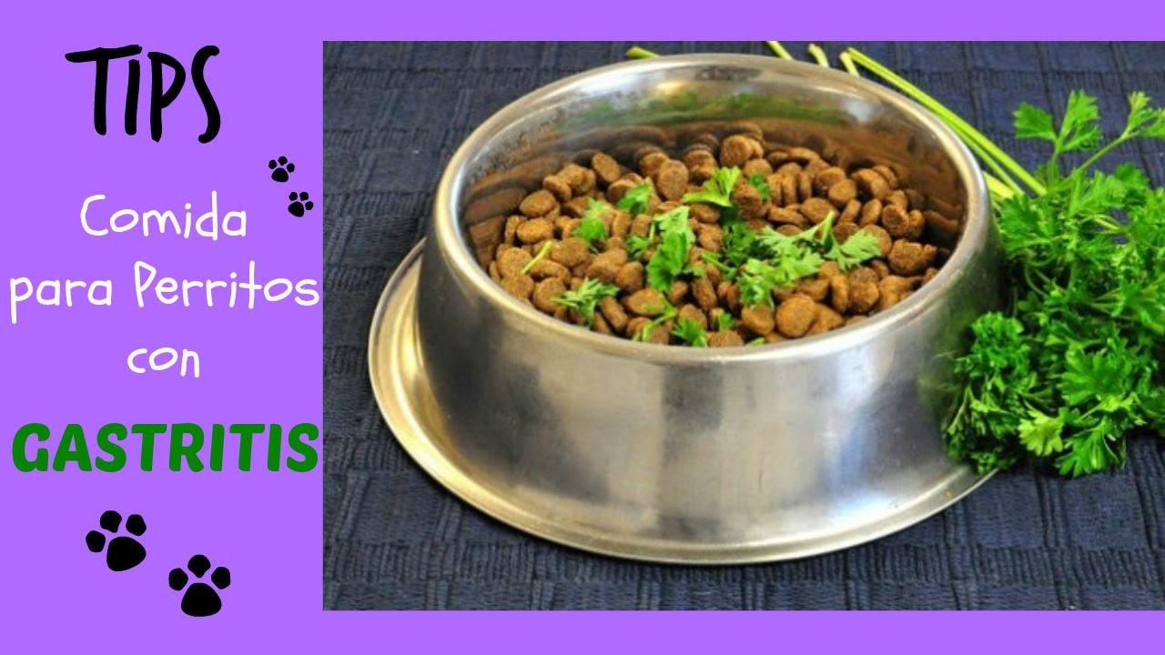 dieta blanda para perros con gastroenteritis