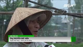 VTC14 | Đà Nẵng: Thời tiết bất lợi, người trồng hoa mùa tết lo lắng
