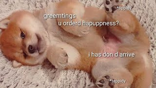 Why have dipressino when u have potatino? Shiba Inu puppies (with captions)