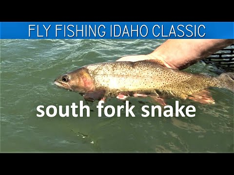 Fly Fishing Idaho FWL Classic  South Fork Snake Palisades Drift With WorldCast Anglers